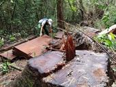 Yêu cầu điều tra vụ khai thác rừng trái phép quy mô lớn tại Đam Rông