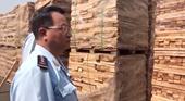 Phát hiện hơn 111 container gỗ xuất khẩu có dấu hiệu gian lận thuế