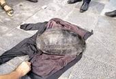 Tạm giữ nam thanh niên nghi câu trộm rùa nặng 20kg ở Hồ Gươm