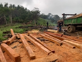 Điều tra vụ phá rừng quy mô lớn giáp ranh giữa Đắk Lắk và Khánh Hòa