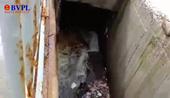 Đã tìm ra thủ phạm xả thải khiến nước biển ở Quảng Ngãi đổi màu