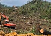 Khởi tố vụ án hủy hoại 24 900m2 rừng ở Lâm Đồng