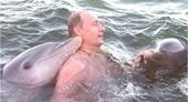 Tổng thống Putin gây bão khi mình trần bơi cùng cá heo trên biển