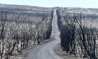 Thảm cảnh chết chóc sau cháy rừng trên đảo Kangaroo, Úc