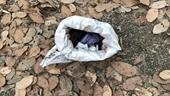 Bàng hoàng phát hiện thi thể trẻ sơ sinh trong bao tải giữa vườn điều