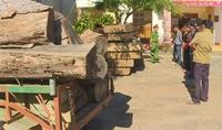 Bắt tạm giam 5 đối tượng vào rừng đặc dụng khai thác gỗ lậu cực lớn