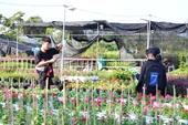 Cận cảnh Làng hoa hơn trăm tuổi tất bật chuẩn bị hoa Tết