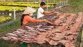 Xóm khô cá lóc xứ sở gạo trắng nước trong tất bật vào Xuân