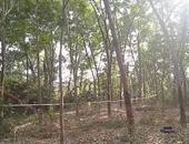 Phát hiện thi thể người đang phân hủy trong rừng cây