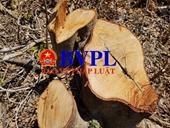 Khởi tố vụ phá rừng Quảng Châu sau phản ánh trên báo Bảo vệ pháp luật