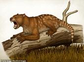 Phát hiện hóa thạch loài sư tử có túi chưa từng biết đến 23 triệu năm