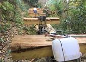 """Thông tin thêm vụ cả đoàn """"lâm tặc"""" rầm rộ vận chuyển gỗ lậu ra khỏi rừng"""