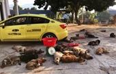 Gọi taxi đến chở 22 con chó vừa trộm cắp