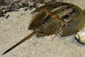 1 người chết, 6 người nguy kịch khi ăn nhầm sam biển
