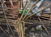 Uống rượu ngâm rễ cây rừng, 2 người đàn ông tử vong