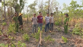 4 đối tượng phá tan hoang gần 2ha rừng để chiếm đất làm rẫy