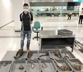 Phát hiện hơn 28kg sừng tê giác được giấu trong kiện hành lý tại sân bay