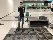 Tạm giam đối tượng vận chuyển trái phép hơn 28kg sừng tê giác vào Việt Nam