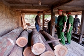 Công an phát hiện kho gỗ lậu trong xưởng gỗ