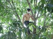 Vụ bay, lắc ở Hà Tĩnh  Dân chơi trèo lên cây trốn truy bắt