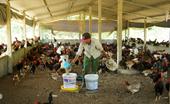 Tiếp tục hỗ trợ 100 mức đóng BHYT cho người dân các xã, thôn đặc biệt khó khăn