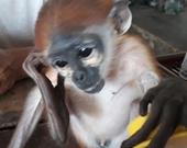 Người dân tham gia giải cứu nhiều động vật rừng nguy cấp, quý hiếm