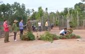Trồng trái phép hơn 500 cây cần sa để lấy lá cho gà ăn phòng dịch bệnh