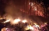 Điều tra vụ cháy gần 100ha rừng tại Khánh Hòa