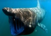 Cá mập quái vật khổng lồ xuất hiện ở bãi biển du lịch Tây Ban Nha