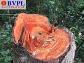 Rừng tự nhiên ở Thường Xuân, Thanh Hóa bị chặt phá nghiêm trọng