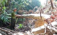 Dấu hiệu pháp lý của Tội vi phạm các quy định về khai thác, bảo vệ rừng và quản lý lâm sản