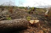 Yêu cầu lập chuyên án xử lý tình trạng hủy hoại rừng bằng hóa chất
