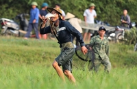 Hàng ngàn người bắt cá dưới nắng nóng ở Lễ hội đánh cá có truyền thống gần 300 năm