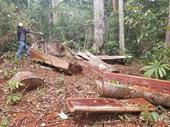Phát hiện vụ phá rừng quy mô lớn ở Gia Lai
