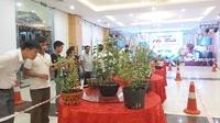 Đấu giá hoa lan, trao 170 triệu đồng xây nhà tình nghĩa cho hoàn cảnh khó khăn