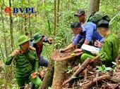 Kiểm sát khám nghiệm hiện trường vụ khai thác gỗ lậu quy mô lớn ở Đắk Lắk