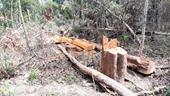 Vụ phá rừng quy mô lớn ở Gia Lai Xem xét kỷ luật nhiều cán bộ