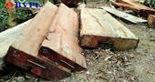 Vụ phá rừng quy mô lớn ở Đắk Lắk Phê chuẩn khởi tố, lệnh tạm giam 2 đối tượng chủ mưu