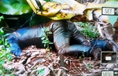 Phát hiện thi thể đàn ông trong vườn chuối