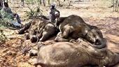 Hơn 350 con voi hoang dã chết bí ẩn giữa mùa dịch COVID-19