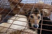 Địa phương đầu tiên ở Campuchiacấm buôn bán và tiêu thụ thịt chó