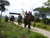 Nữ du khách gãy 4 xương sườn vì bị ngã trong lúc cưỡi voi