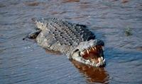 Tên đồ tể man rợ, sát hại hơn 50 tài xế taxi phi tang xác xuống kênh cá sấu
