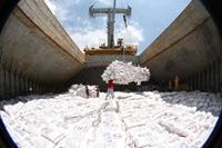 Doanh nghiệp xuất khẩu gạo đi EU có phải đăng ký hạn ngạch