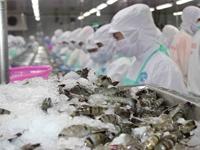 Đang mùa dịch COVID-19 nhưng tôm Việt Nam vẫn kiếm bộn tiền trên đất Mỹ