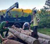 Phát hiện một lượng gỗ vô chủ tập kết trái phép ở huyện Hương Sơn