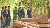 13 thanh niên dính vòng lao lý vì vào khu bảo tồn khai thác gỗ Giáng Hương