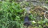 Tìm thân nhân người phụ nữ tử nạn trên sông Sài Gòn