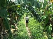 Đã bắt được nghi phạm xâm hại tình dục bé gái trong vườn chuối ở Hà Nội