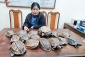 Phát hiện người phụ nữ vận chuyển 15 cá thể rùa còn sống